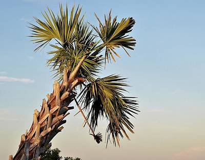 Photograph - Leeward Palm by John Hintz