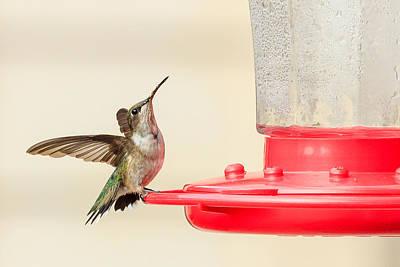 Photograph - Left Hummingbird by Joni Eskridge