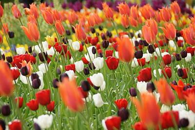 Photograph - Left Leaning Flora by Brandy Herren