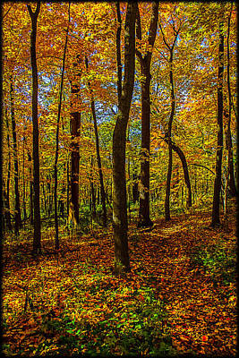 Photograph - Left Or Right? Lost In The Woods by Roger Passman