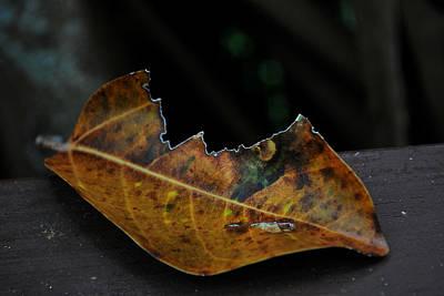 Photograph - Left To Leave by Amanda Vouglas