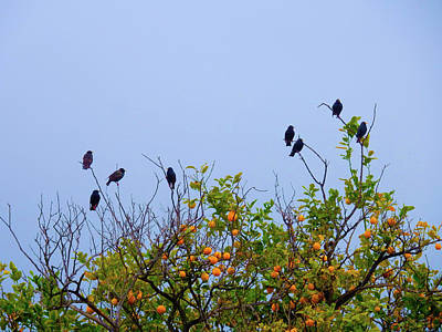 Photograph - Lemon Birds by Mark Blauhoefer