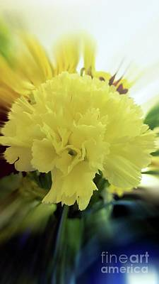 Photograph - Lemon Carnation by Rachel Hannah