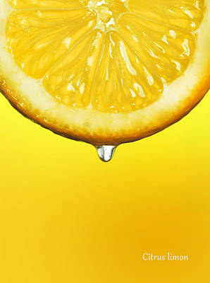 Lemon Photograph - Lemon Drop by Mark Rogan