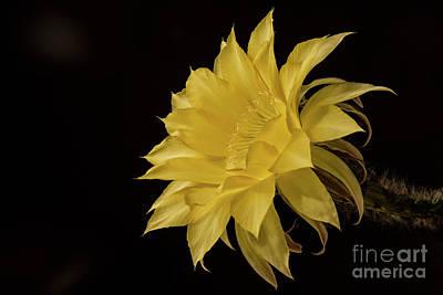 Photograph - Lemon Pie by Bryan Keil