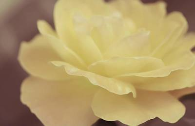 Lemon Photograph - Lemon Scent Of Rose by The Art Of Marilyn Ridoutt-Greene