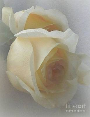 Photograph - Lemon Spice Rose by Diana Besser