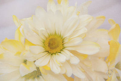 Photograph - Lemon Sunshine by Pamela Williams