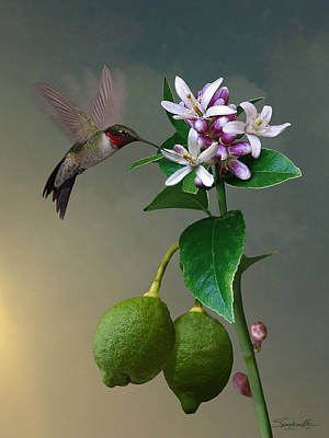 Digital Art - Lemon Tree And Hummingbird by Spadecaller