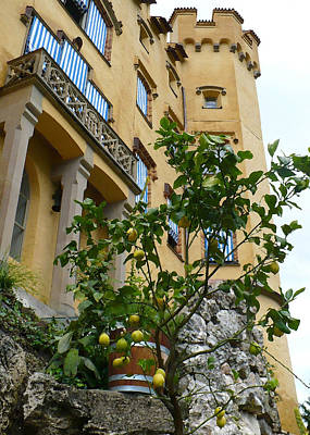 Traditional Bells Rights Managed Images - Lemon Tree at Hohanschwanstein Castle - Digital Painting Royalty-Free Image by Carol Groenen