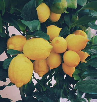 Lemon Photograph - Lemon Tree by Happy Home Artistry