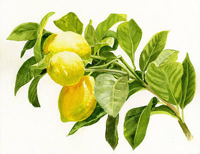 Lemons On A Branch Art Print by Sharon Freeman