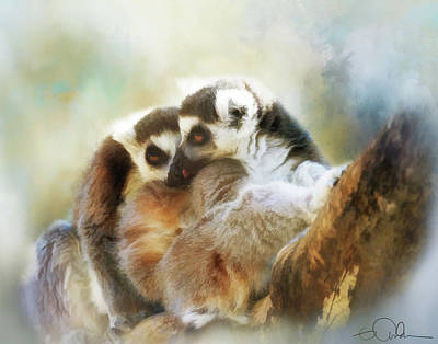 Photograph - Lemur Cuddle by Gloria Anderson