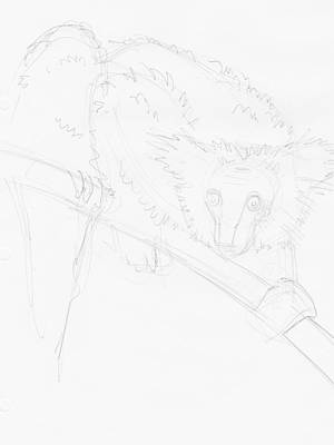 Drawing - Lemur Drawing by Mike Jory