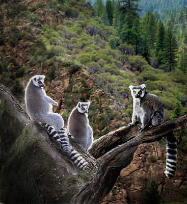 Photograph - Lemur Family by Melinda Hughes-Berland