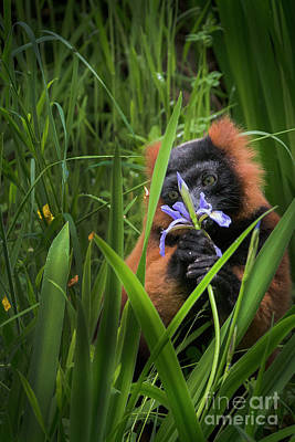 Photograph - Lemur Loves Flowers by Sonya Lang