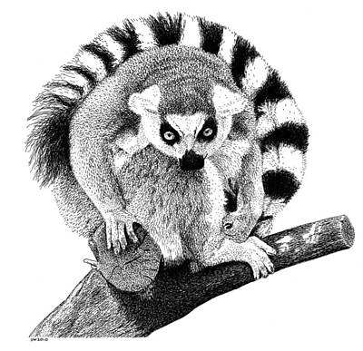 Drawing - Lemur by Scott Woyak
