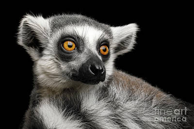 Photograph - Lemur by Sergey Taran