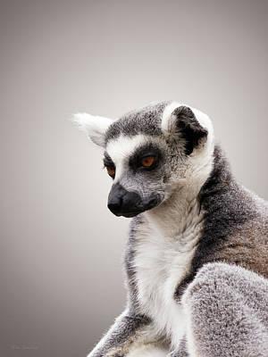 Photograph - Lemuriformes by Wim Lanclus