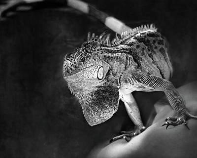 Iguana Wall Art - Photograph - Lenny The Iguana by Susan Capuano