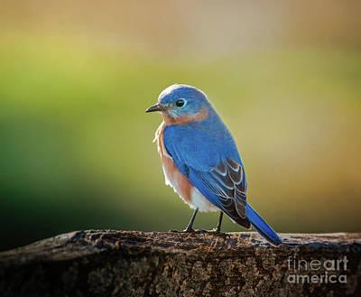 Lenore's Bluebird Art Print