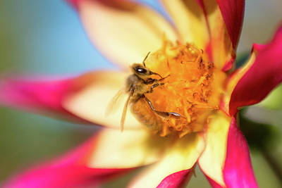 Photograph - Lensbaby Bee by Brian Hale