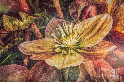 Natural Finish Photograph - Lenten Rose by Jean OKeeffe Macro Abundance Art