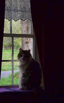 Photograph - Leo In The Window by Danielle R T Haney