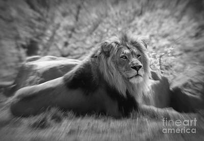 Photograph - Leo The Lion by Chris Scroggins