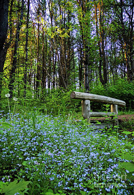 Photograph - Leon Gorman Park Trail, Freeport, Maine  #50600 by John Bald