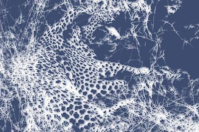 Leopard 2 Art Print by Joe Hamilton