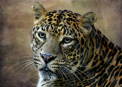 Photograph - Leopard 2 by Judy Vincent
