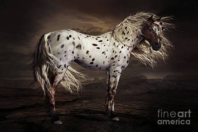 Horses Digital Art - Leopard Appalossa by Shanina Conway