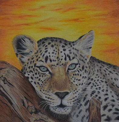 Cheetah Drawing - Leopard At Sunset by Biophilic Art