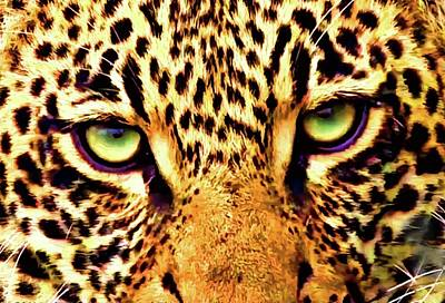Photograph - Leopard Eyes by Gini Moore
