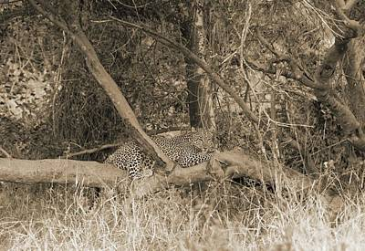 Photograph - Leopard by Felix Concepcion
