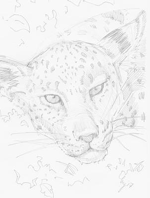 Drawing - Leopard Head Drawing by Mike Jory