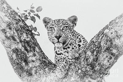 Photograph - Leopard In Black And White by Jennifer Ludlum