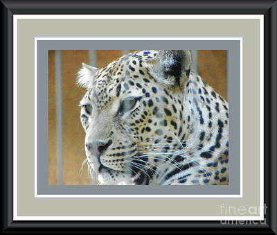 Photograph - Leopard In Memphis by Shirley Moravec