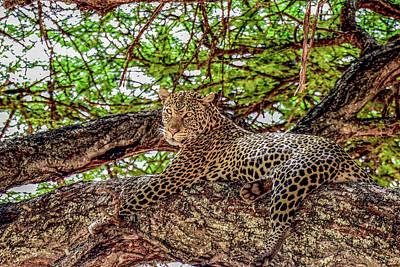 Photograph - Leopard In Tarangire National Park by Marilyn Burton