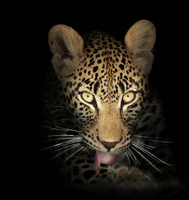 Portraits Royalty-Free and Rights-Managed Images - Leopard In The Dark by Johan Swanepoel