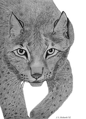 Drawing - Leopard by Jennie  Richards