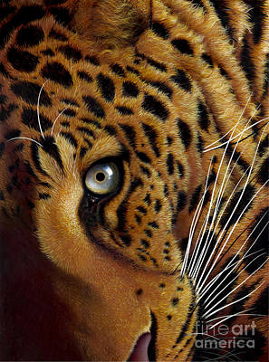 Wild Cat Painting - Leopard by Jurek Zamoyski
