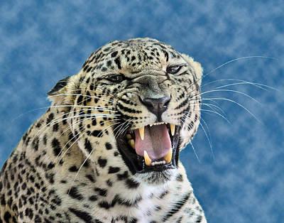 Leopard  Art Print by Keith Lovejoy