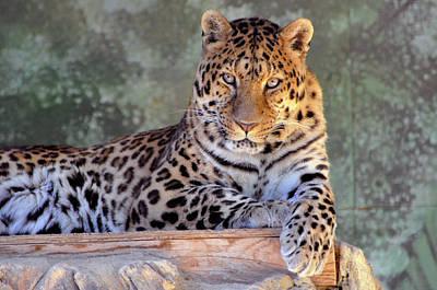 Rosamond California Photograph - Leopard by Larry Holt