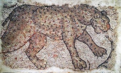 Photograph - Leopard Mosaic No. 48-1 by Sandy Taylor