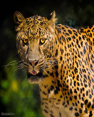 Leopard Photograph - Leopard Nature Wear by LeeAnn McLaneGoetz McLaneGoetzStudioLLCcom
