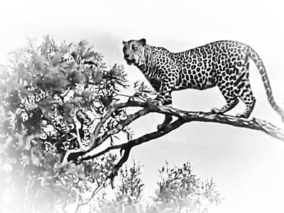 Photograph - Leopard On Branch by Gini Moore