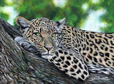 Painting - Leopard On Branch by John Neeve
