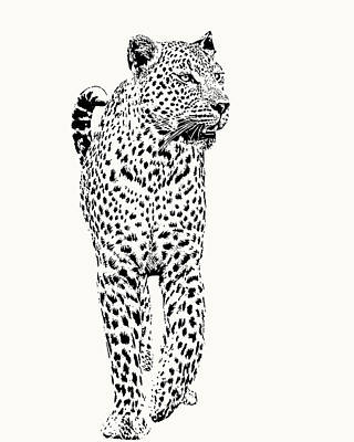 Art Print featuring the photograph Leopard On Patrol, Front-on View by Scotch Macaskill